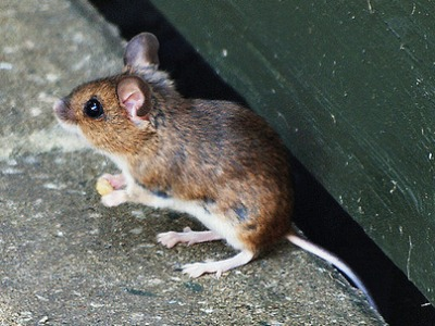 Tina provided this quick tip about how to keep mice out of your home