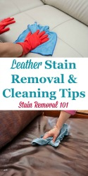 Leather Stain Removal & Cleaning Tips