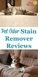 Pet Odor Stain Remover
