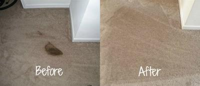 Pet Vomit Stain Removal With Home Carpet Cleaner
