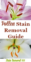Pollen Stain Removal Guide