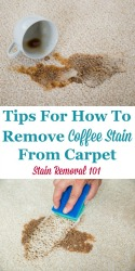 Coffee Stain From Carpet