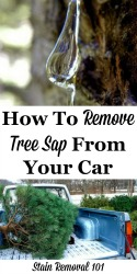 How To Remove Tree Sap From Car