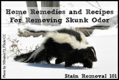 Home Odor Removal removing skunk odor: home remedies & recipes you can use