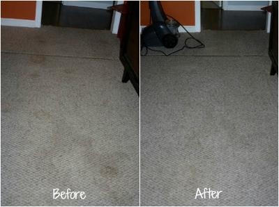 Removing Pet Stains On Carpet Tips Amp Tricks