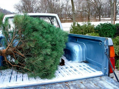 How To Get Tree Sap Off Car Paint