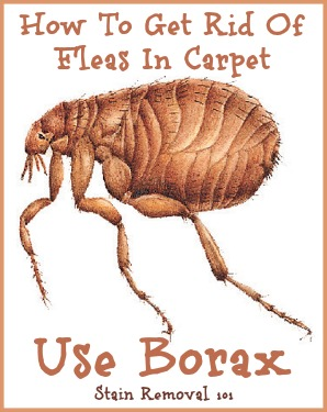 Uses For Borax Around Your Home
