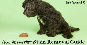 Feces and diarrhea stain removal guide