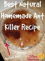 Homemade Ant Killer Recipe