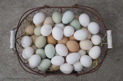 Eggs Are For Eating, Not Cars