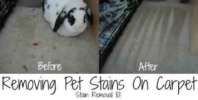 Pet Stains On Carpet Removing With Home Cleaner