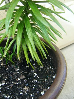 What To Do When This Potted Plant Falls Over On Your Carpet