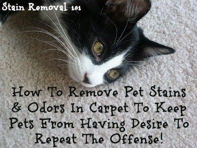 removing pet stains on carpet tips tricks. Black Bedroom Furniture Sets. Home Design Ideas