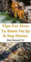 Sap Stain Removal