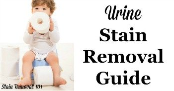 Urine stain removal guide